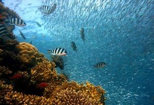 fish-378286_1280