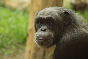 monkey-757210_1920